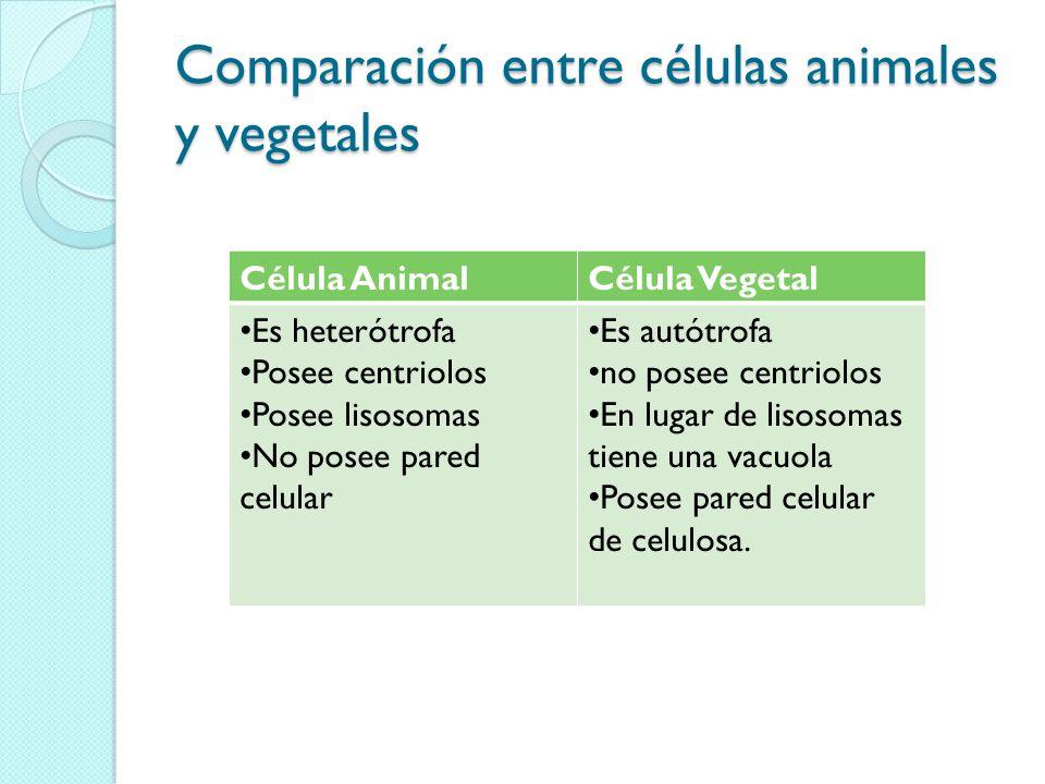 Comparación entre células animales y vegetales