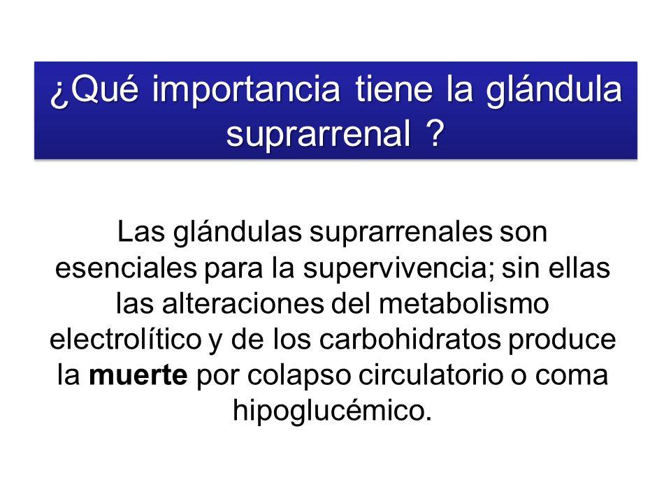 ¿Qué importancia tiene la glándula suprarrenal