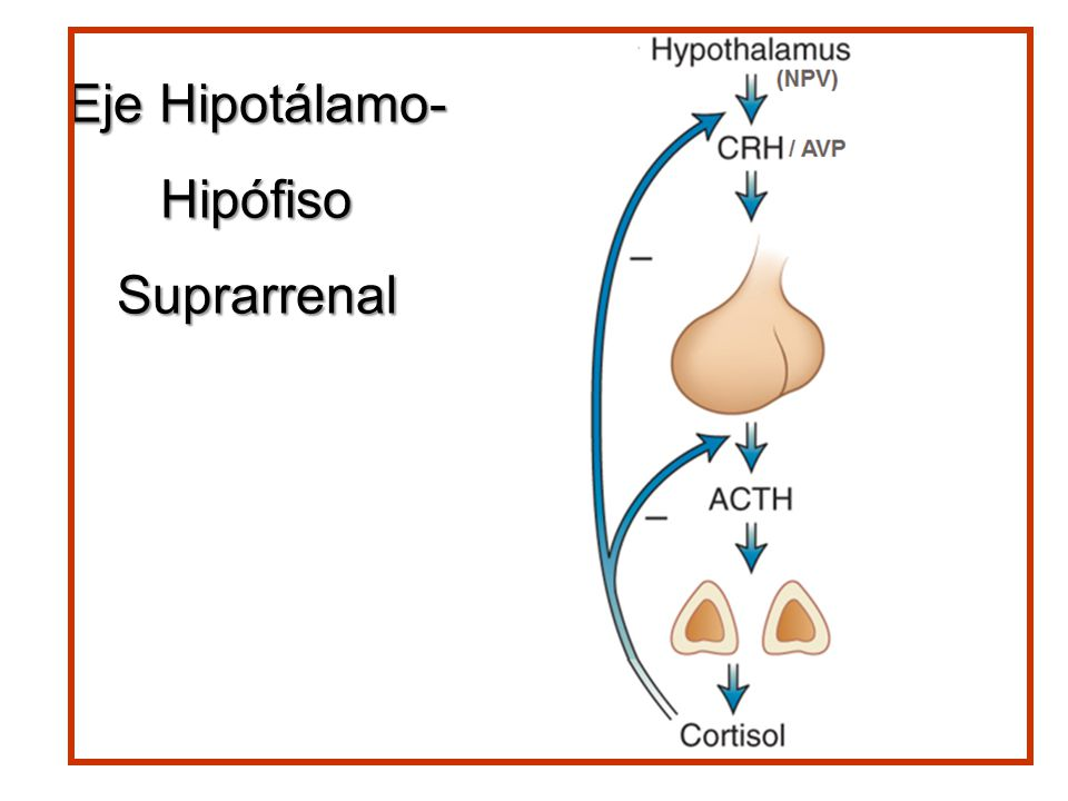Eje Hipotálamo- Hipófiso Suprarrenal