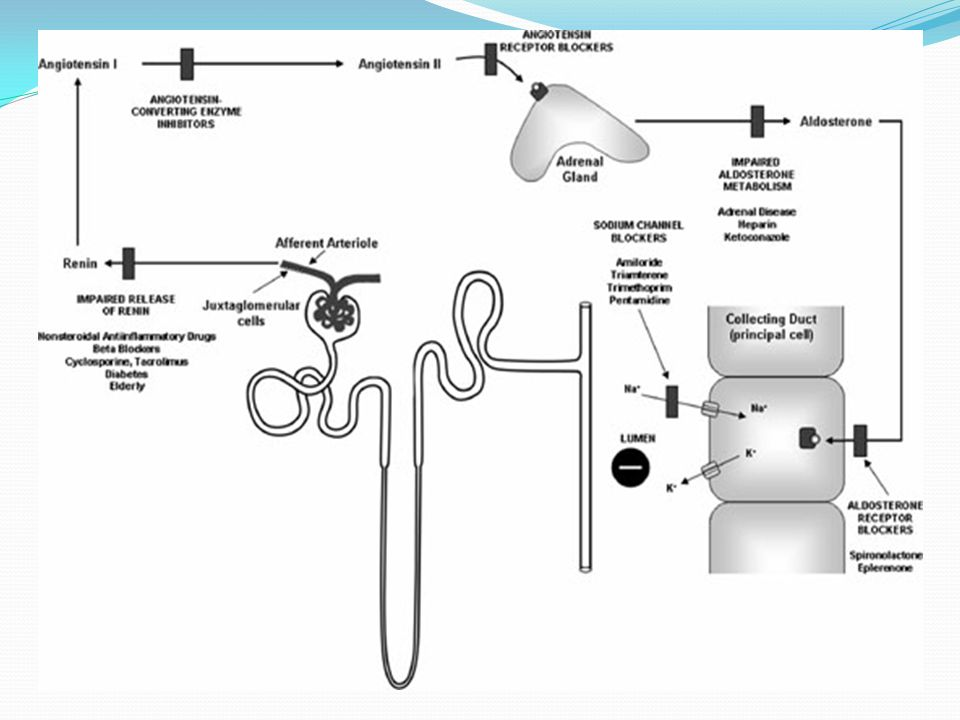 FIGURE 44-4. The renin-angiotensin-aldosterone system and regulation of renal potassium excretion.