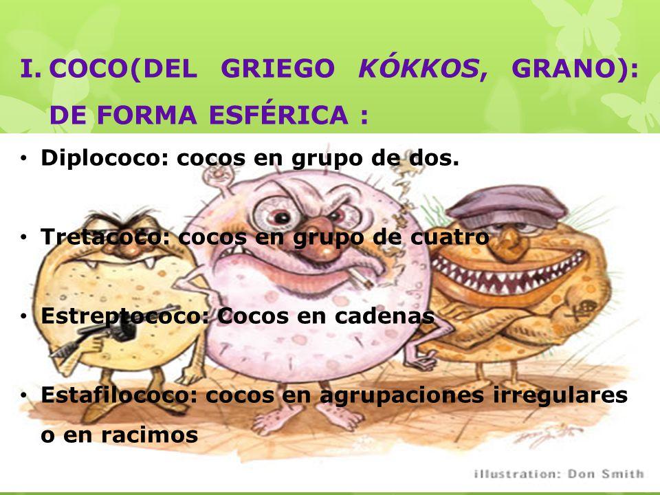 COCO(DEL GRIEGO KÓKKOS, GRANO): DE FORMA ESFÉRICA :