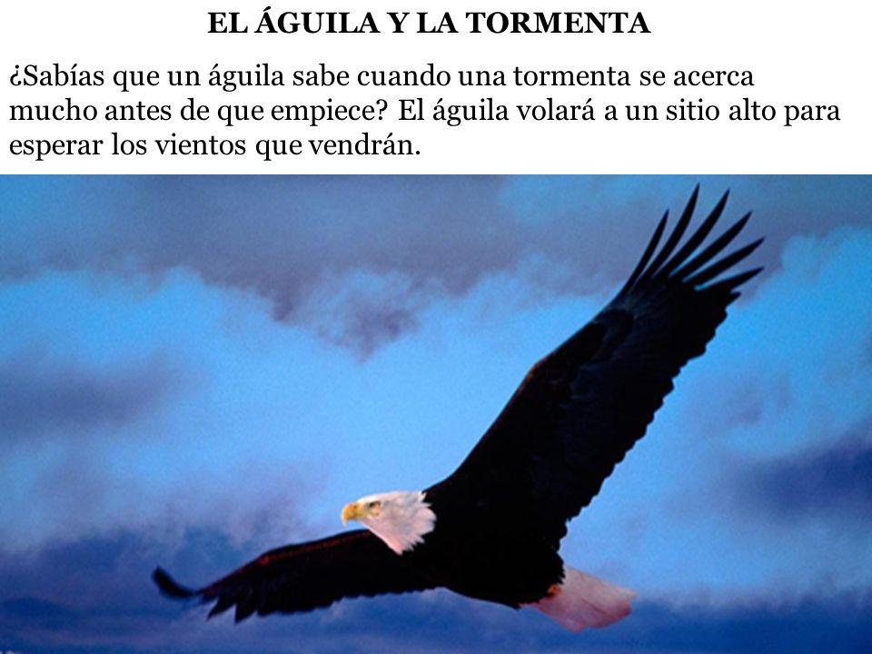 EL ÁGUILA Y LA TORMENTA