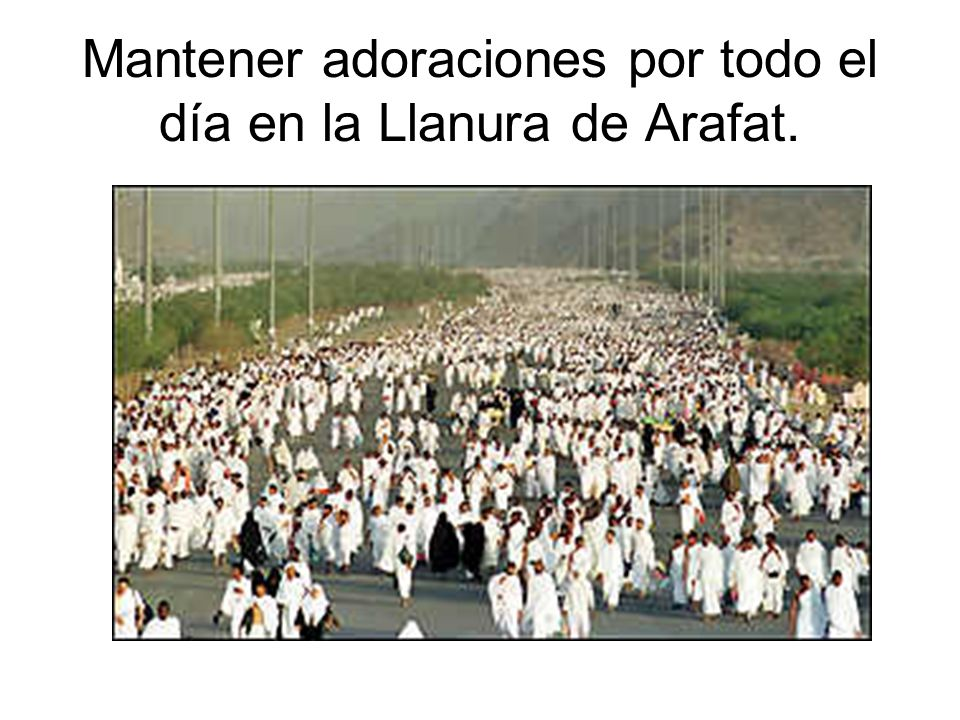 Mantener adoraciones por todo el día en la Llanura de Arafat.