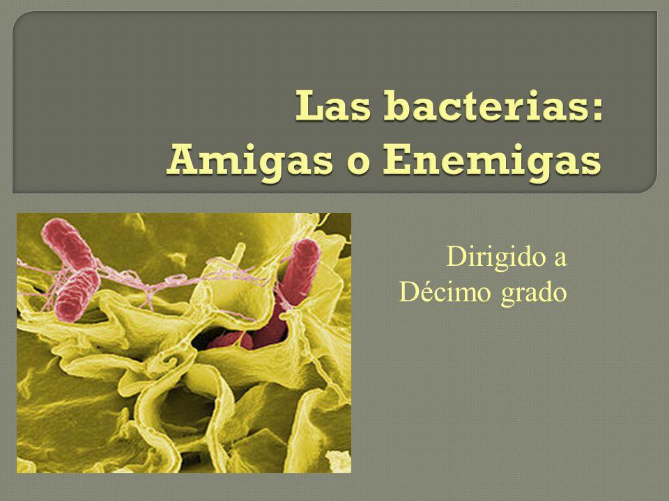 Las bacterias: Amigas o Enemigas