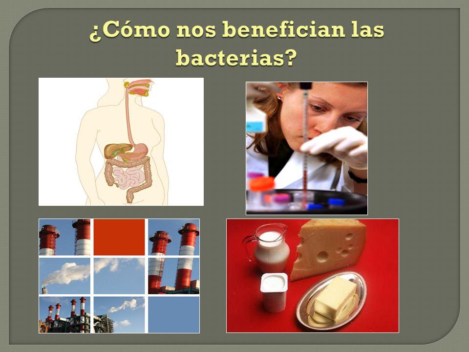 ¿Cómo nos benefician las bacterias