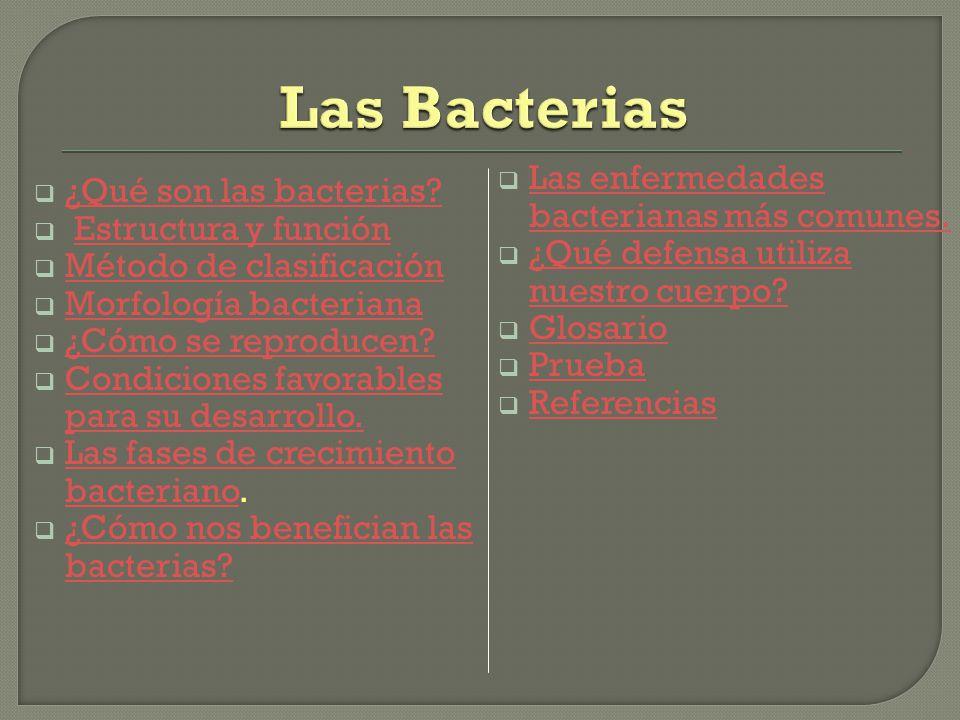 Las Bacterias Las enfermedades bacterianas más comunes.