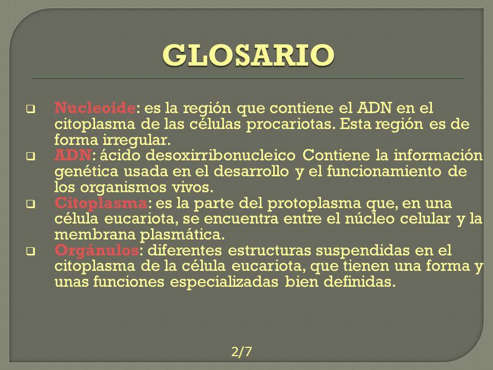 GLOSARIO Nucleoide: es la región que contiene el ADN en el citoplasma de las células procariotas. Esta región es de forma irregular.