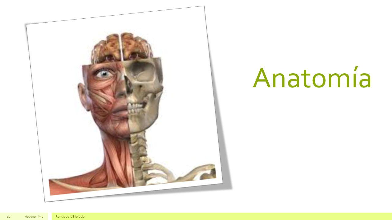 Anatomía Noveno nivle Ramas de la Biología
