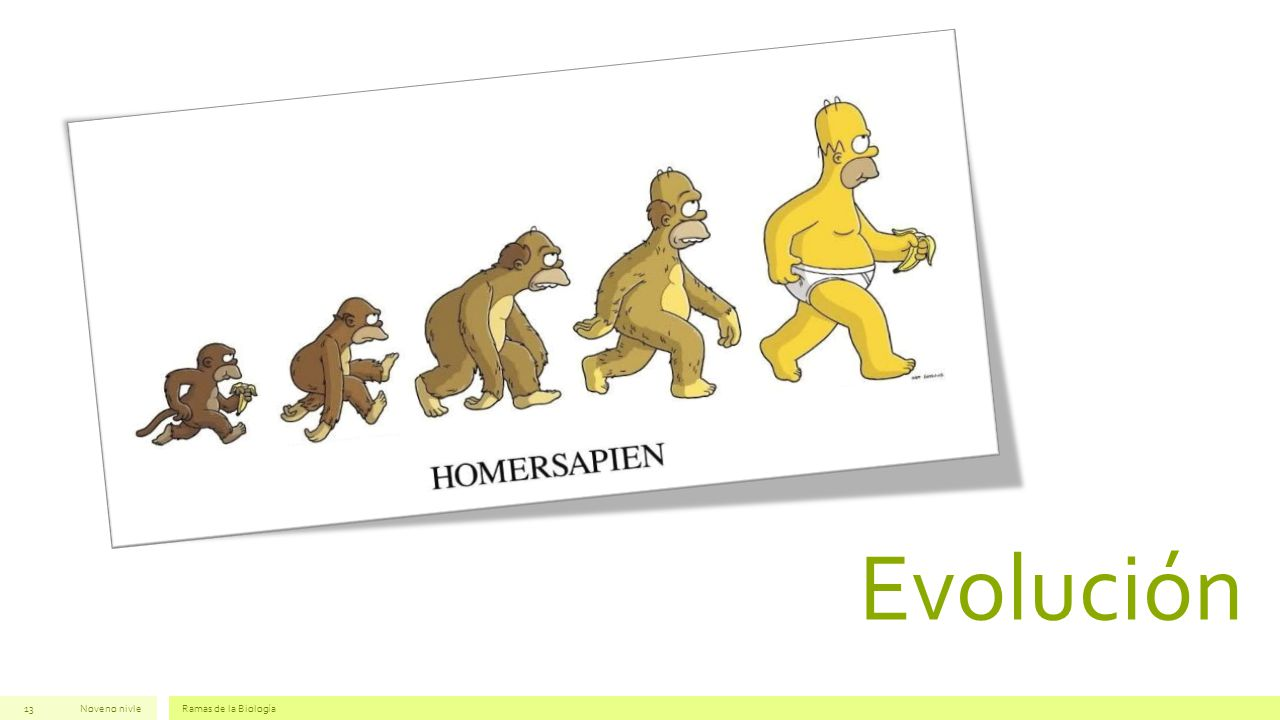 Evolución Noveno nivle Ramas de la Biología