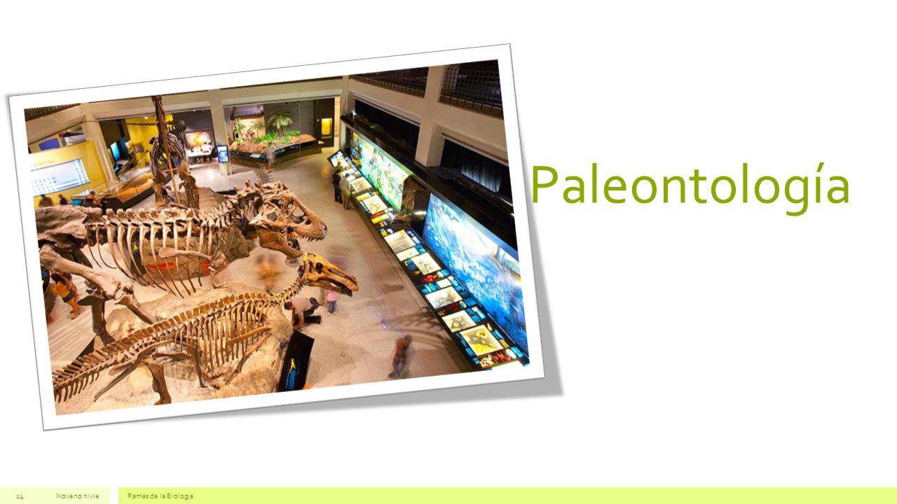 Paleontología Noveno nivle Ramas de la Biología