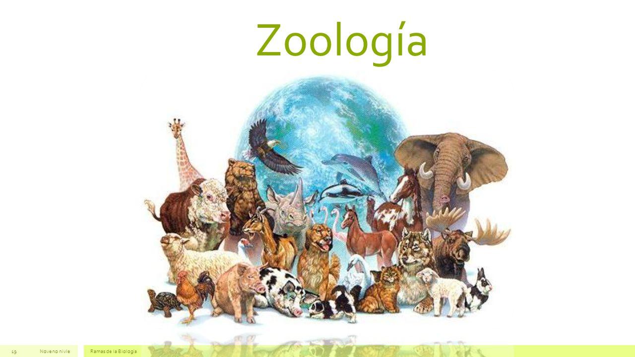 Zoología Noveno nivle Ramas de la Biología