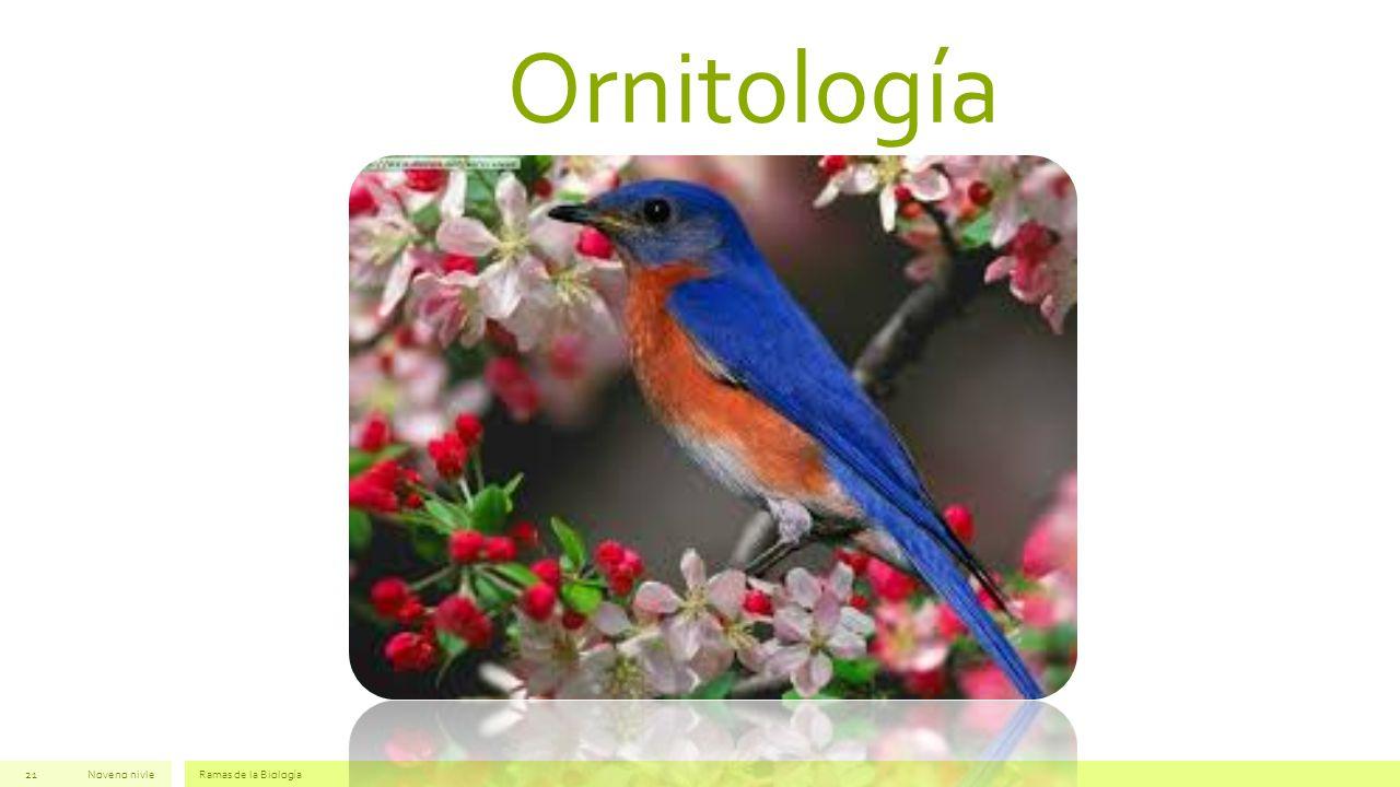 Ornitología Noveno nivle Ramas de la Biología