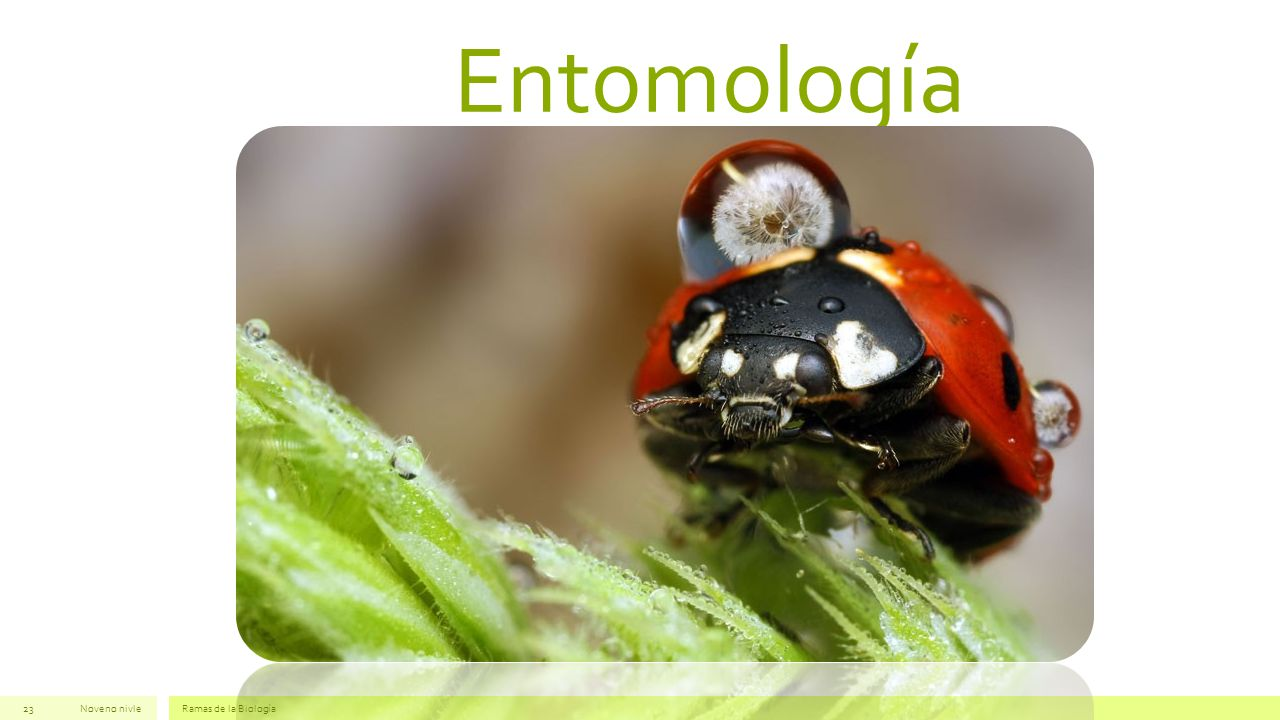 Entomología Noveno nivle Ramas de la Biología