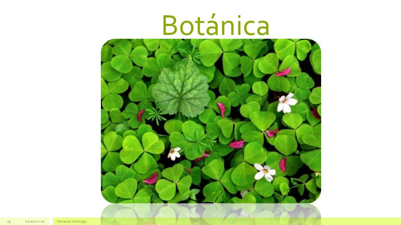 Botánica Noveno nivle Ramas de la Biología