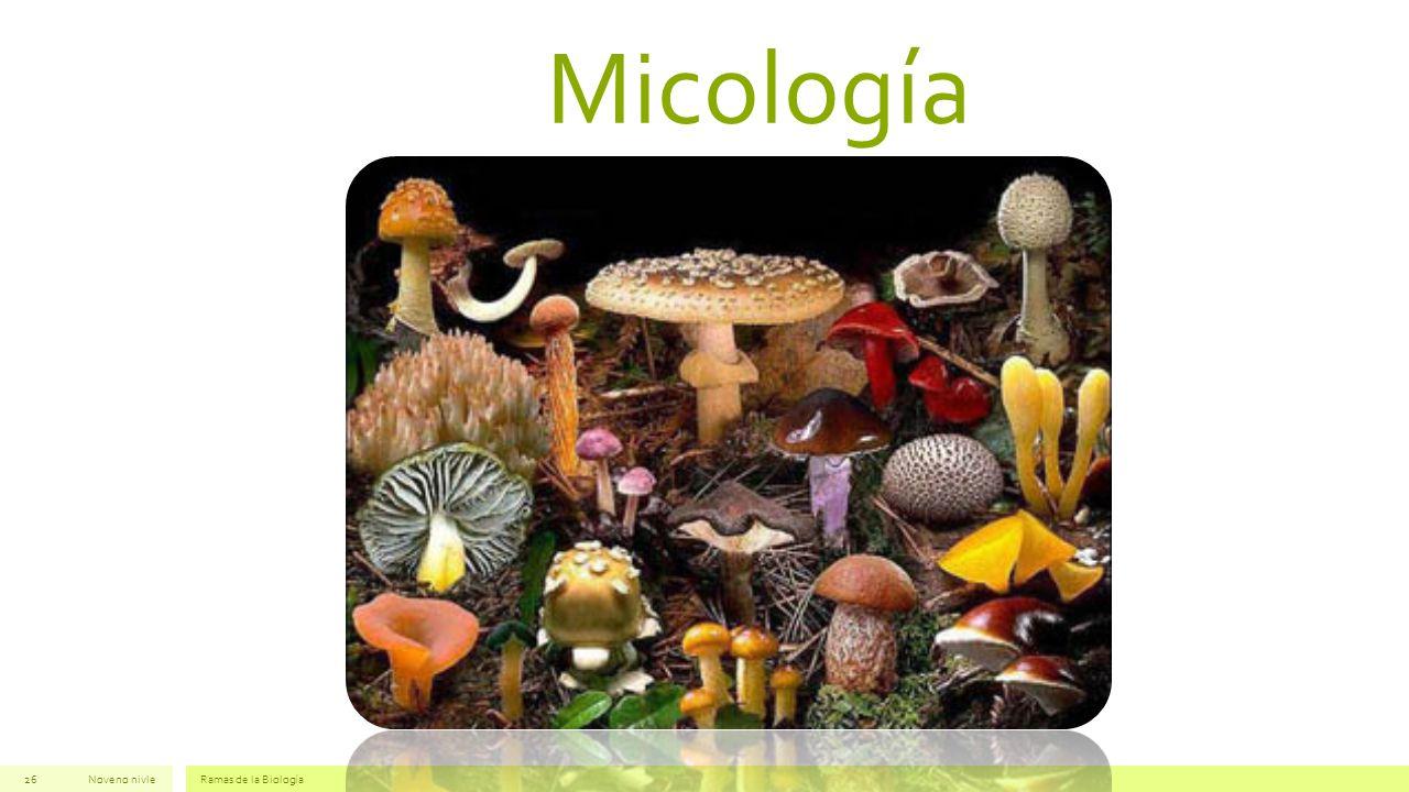 Micología Noveno nivle Ramas de la Biología