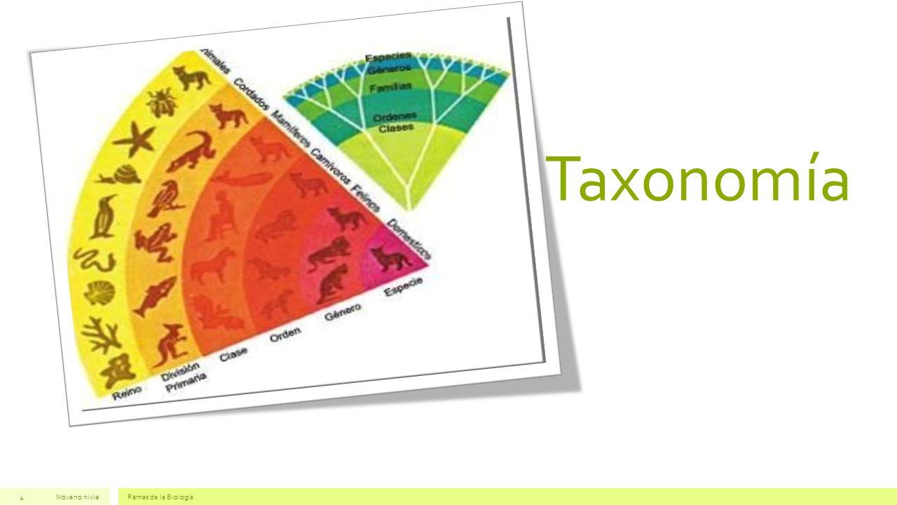 Taxonomía Noveno nivle Ramas de la Biología