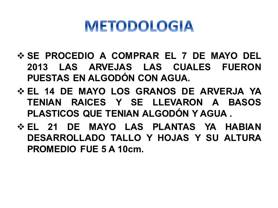 METODOLOGIA SE PROCEDIO A COMPRAR EL 7 DE MAYO DEL 2013 LAS ARVEJAS LAS CUALES FUERON PUESTAS EN ALGODÓN CON AGUA.