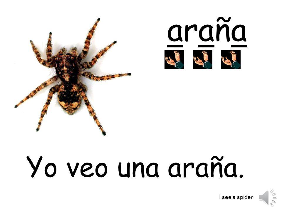 araña Yo veo una araña. I see a spider.