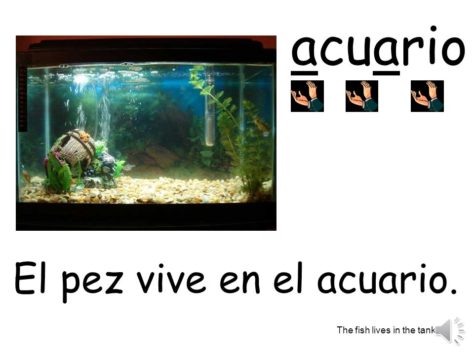acuario El pez vive en el acuario. The fish lives in the tank.