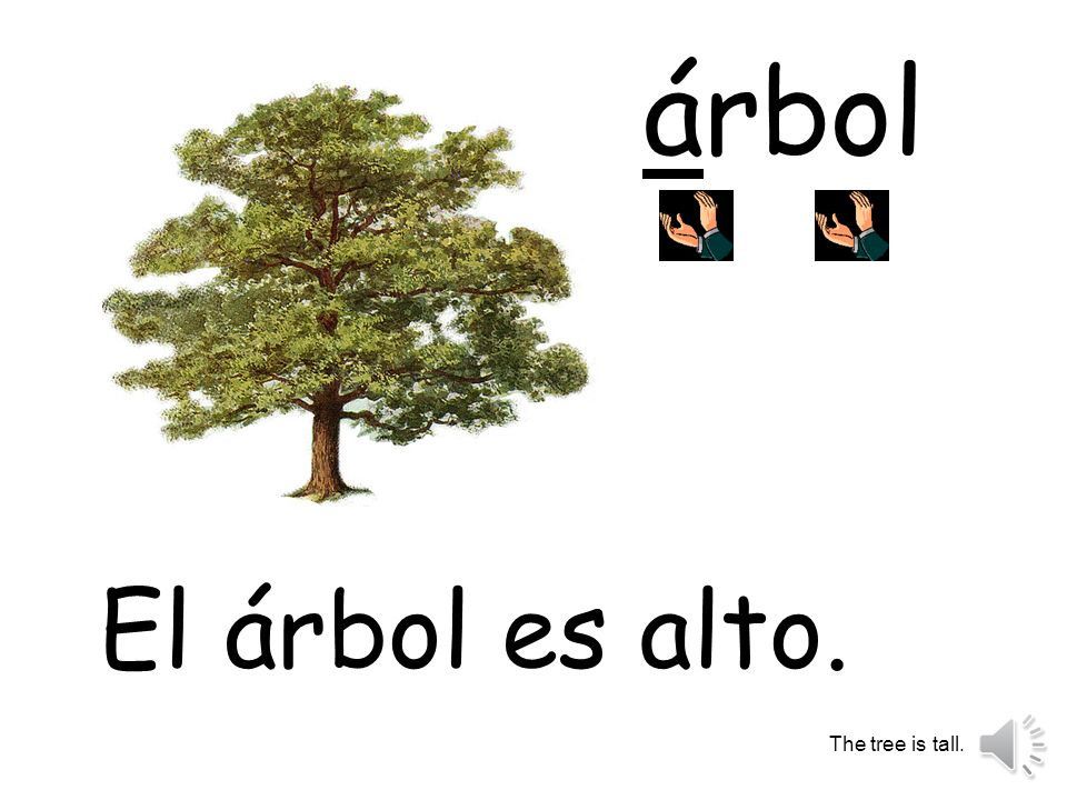 árbol El árbol es alto. The tree is tall.