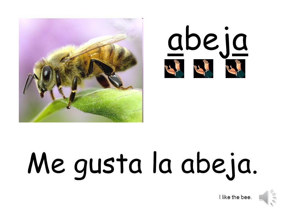 abeja Me gusta la abeja. I like the bee.
