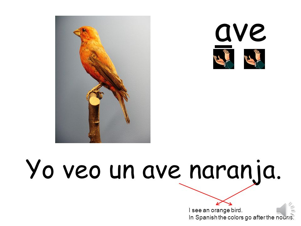 ave Yo veo un ave naranja. I see an orange bird.