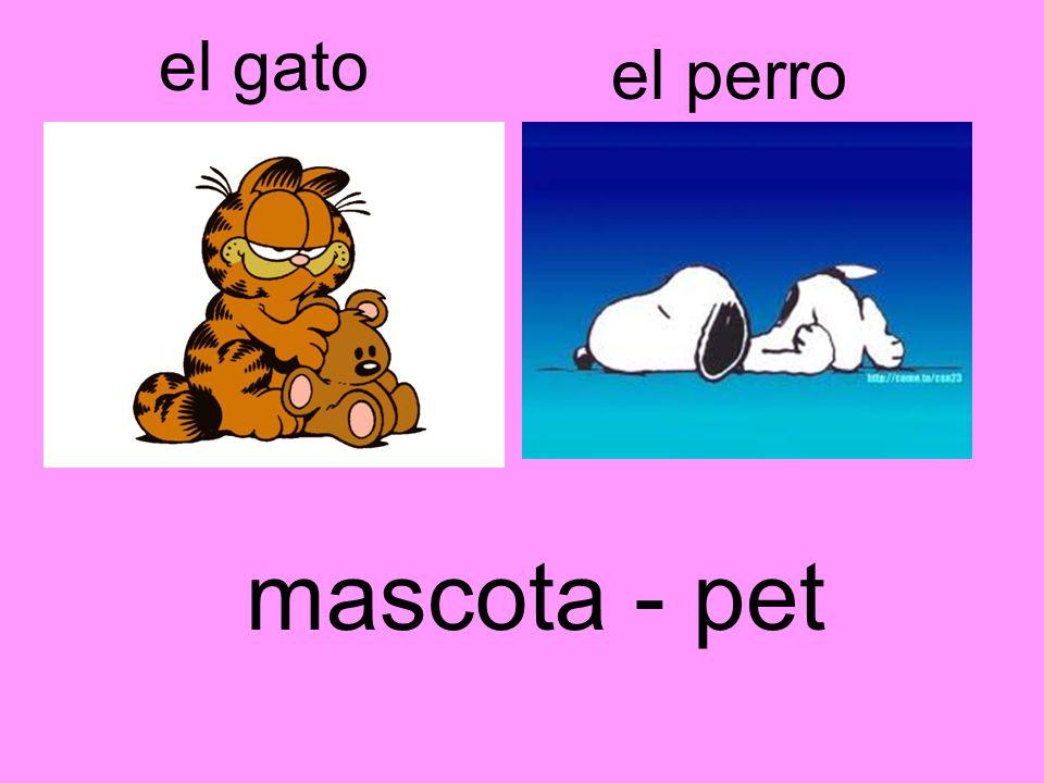 el gato el perro mascota - pet