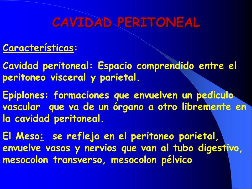 CAVIDAD PERITONEAL Características: