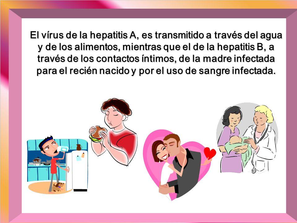 El vírus de la hepatitis A, es transmitido a través del agua y de los alimentos, mientras que el de la hepatitis B, a través de los contactos íntimos, de la madre infectada para el recién nacido y por el uso de sangre infectada.