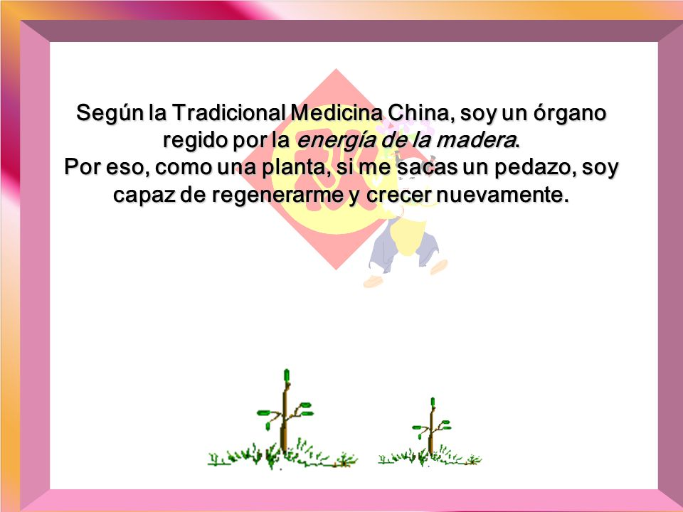 Según la Tradicional Medicina China, soy un órgano regido por la energía de la madera.