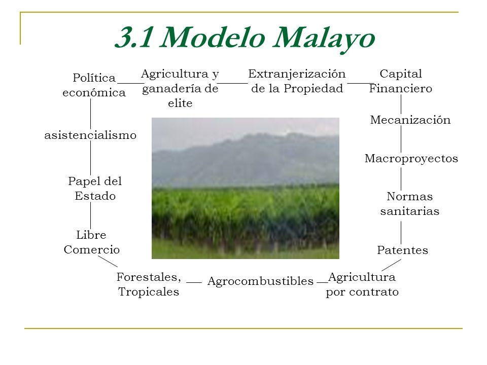 3.1 Modelo Malayo Agricultura y ganadería de elite