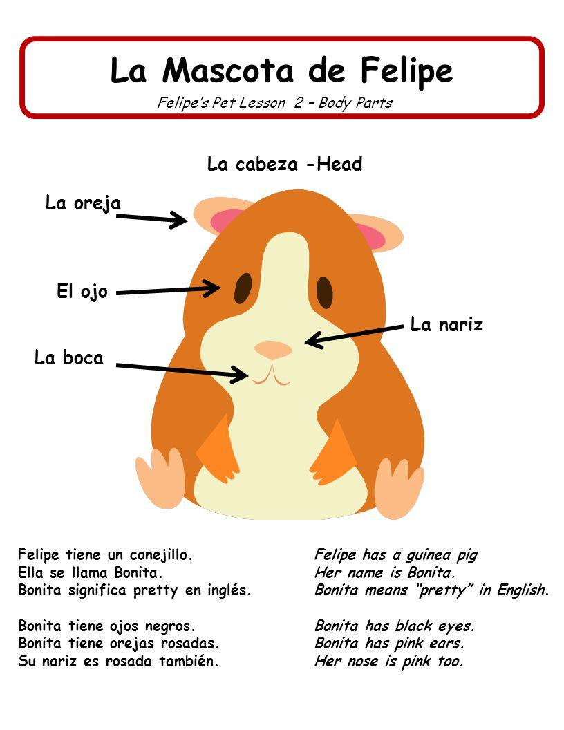 Felipe's Pet Lesson 2 – Body Parts