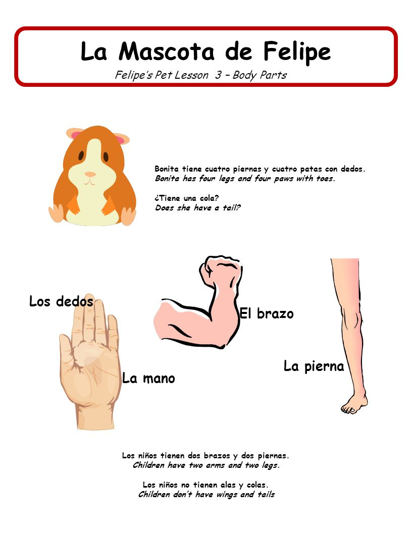 La Mascota de Felipe Los dedos El brazo La pierna La mano