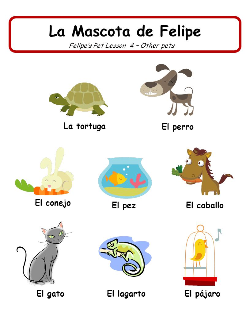 Felipe's Pet Lesson 4 – Other pets