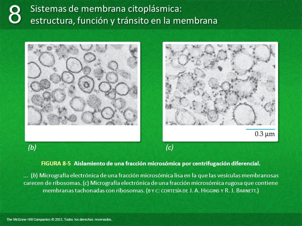 (b) (c) FIGURA 8-5 Aislamiento de una fracción microsómica por centrifugación diferencial.