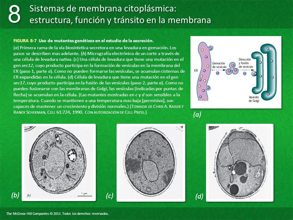 FIGURA 8-7 Uso de mutantes genéticos en el estudio de la secreción.