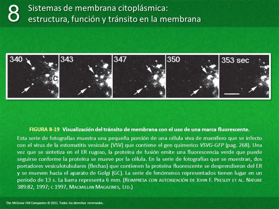 FIGURA 8-19 Visualización del tránsito de membrana con el uso de una marca fluorescente.