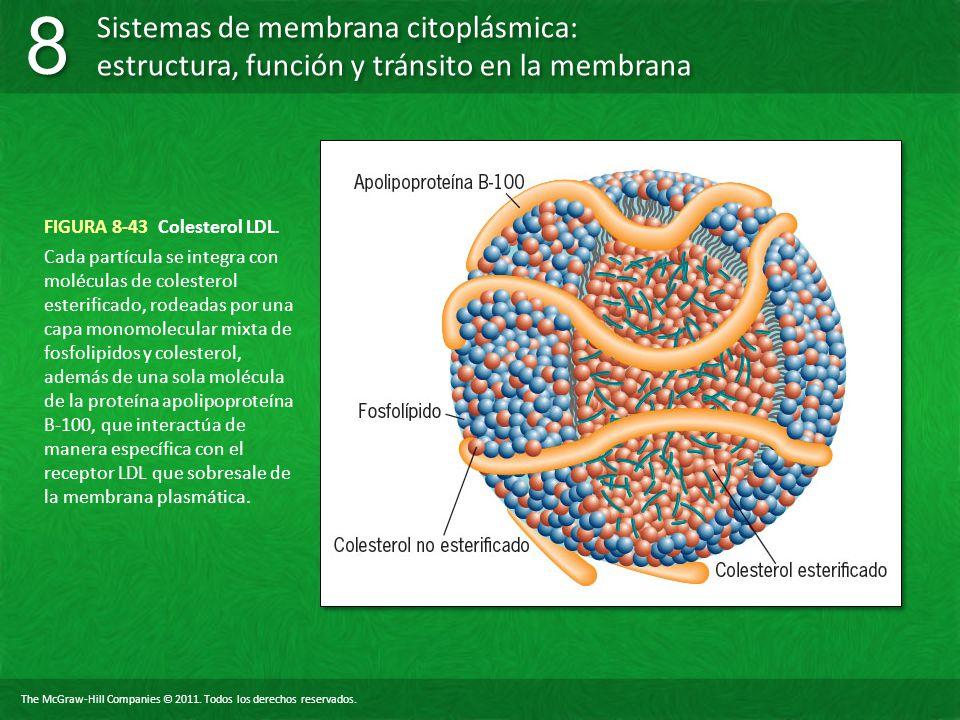 FIGURA 8-43 Colesterol LDL.