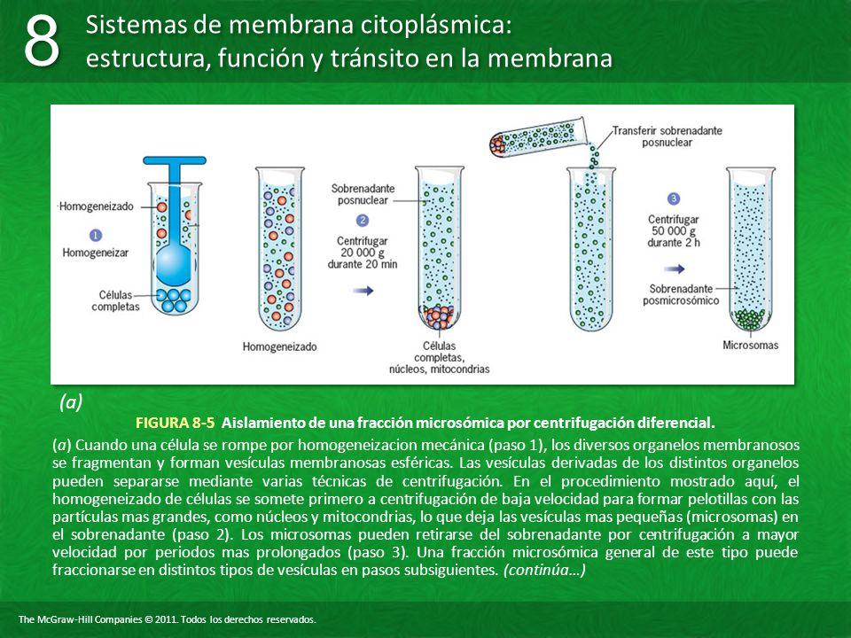 (a) FIGURA 8-5 Aislamiento de una fracción microsómica por centrifugación diferencial.