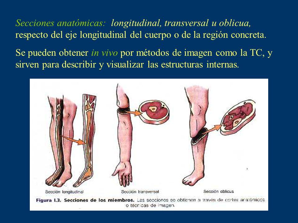 Secciones anatómicas: longitudinal, transversal u oblicua, respecto del eje longitudinal del cuerpo o de la región concreta.
