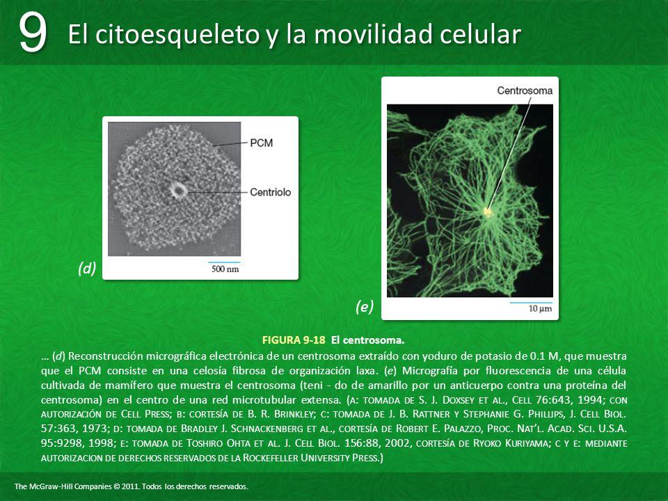 (d) (e) FIGURA 9-18 El centrosoma.