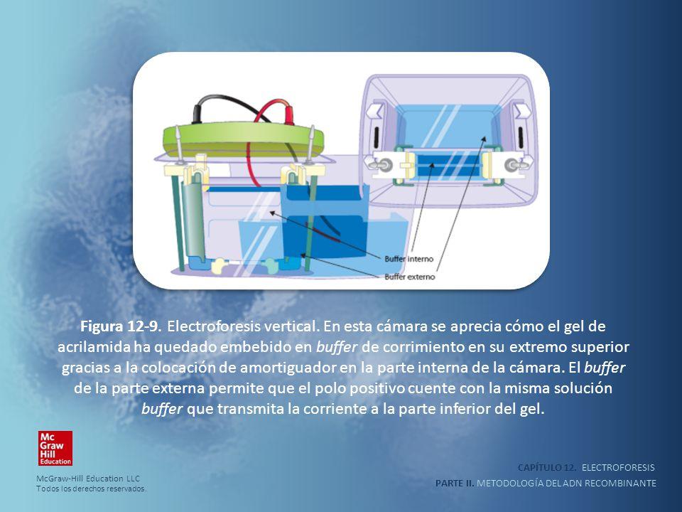 Figura 12-9. Electroforesis vertical
