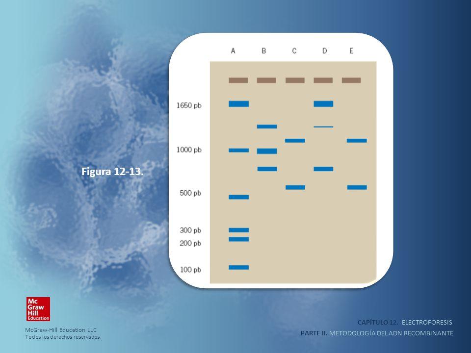 Figura 12-13. CAPÍTULO 12. ELECTROFORESIS