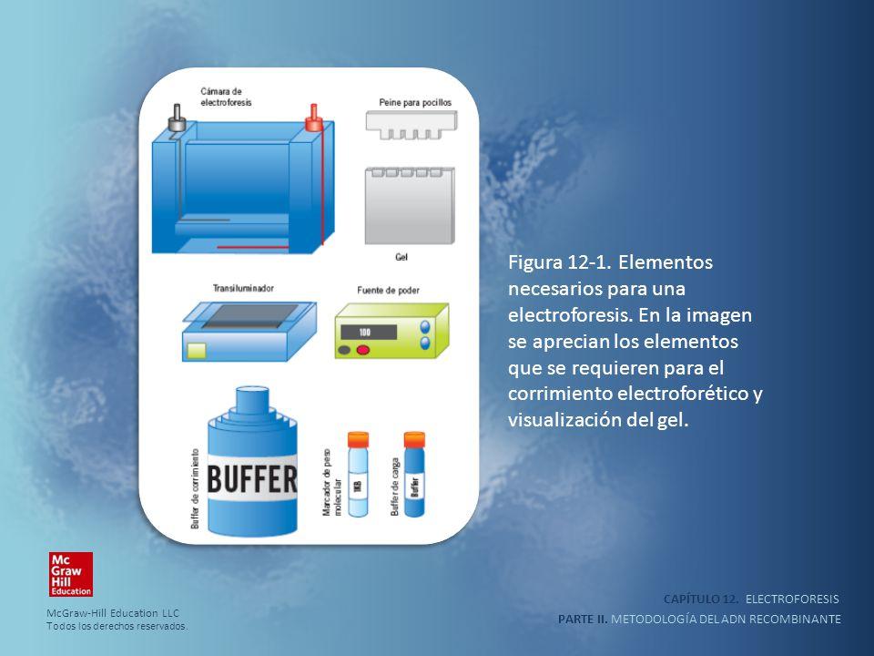 corrimiento electroforético y visualización del gel.