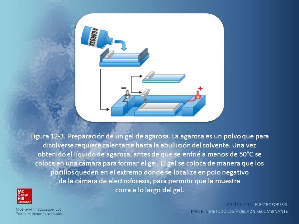 Figura 12-3. Preparación de un gel de agarosa