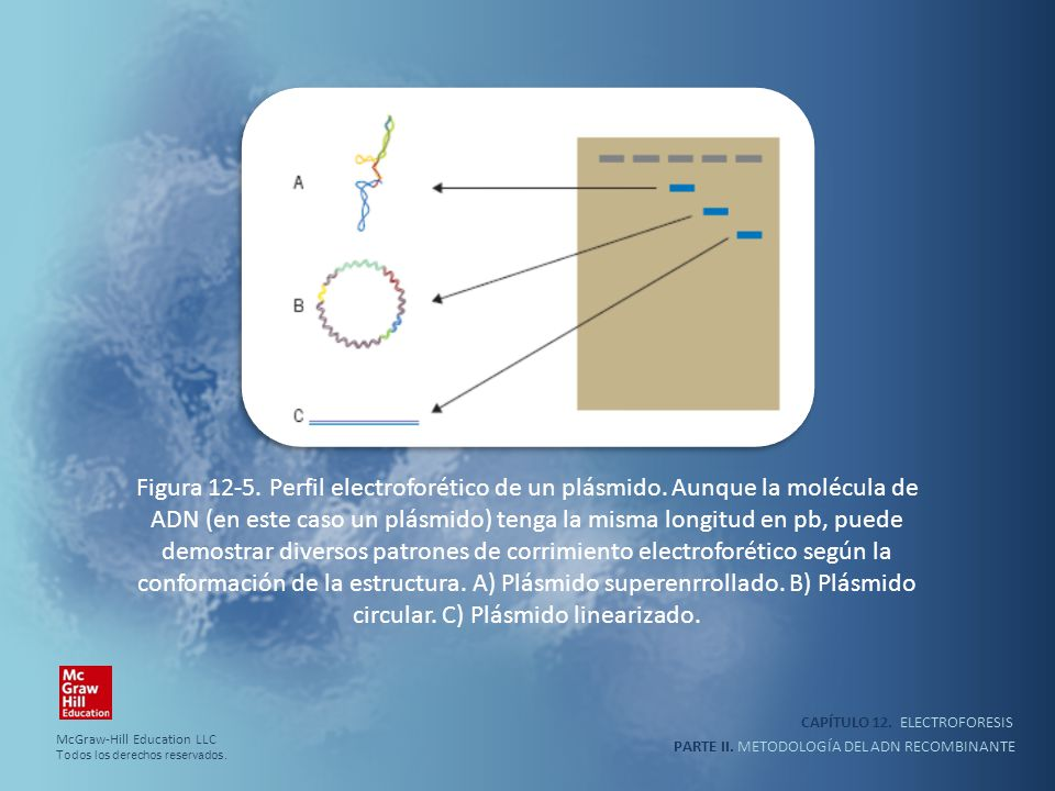 Figura 12-5. Perfil electroforético de un plásmido