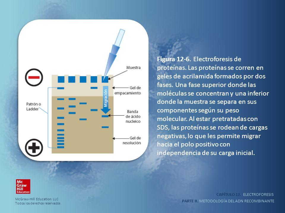 Figura 12-6. Electroforesis de proteínas