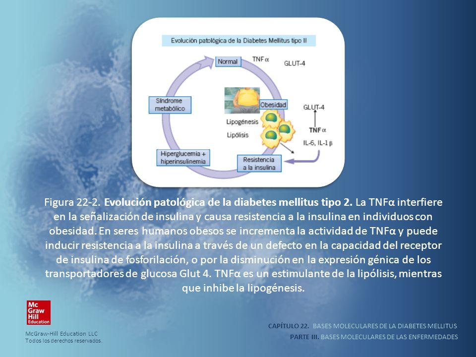 Figura 22-2. Evolución patológica de la diabetes mellitus tipo 2