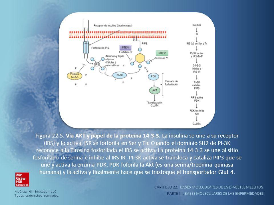 Figura 22-5. Vía AKT y papel de la proteína 14-3-3