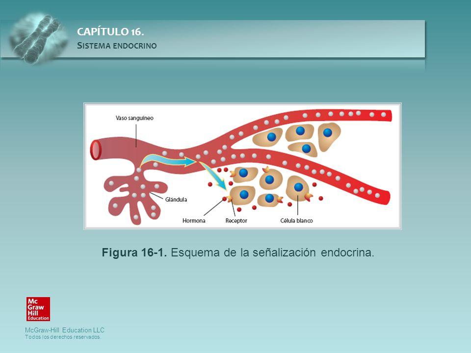 Figura 16-1. Esquema de la señalización endocrina.